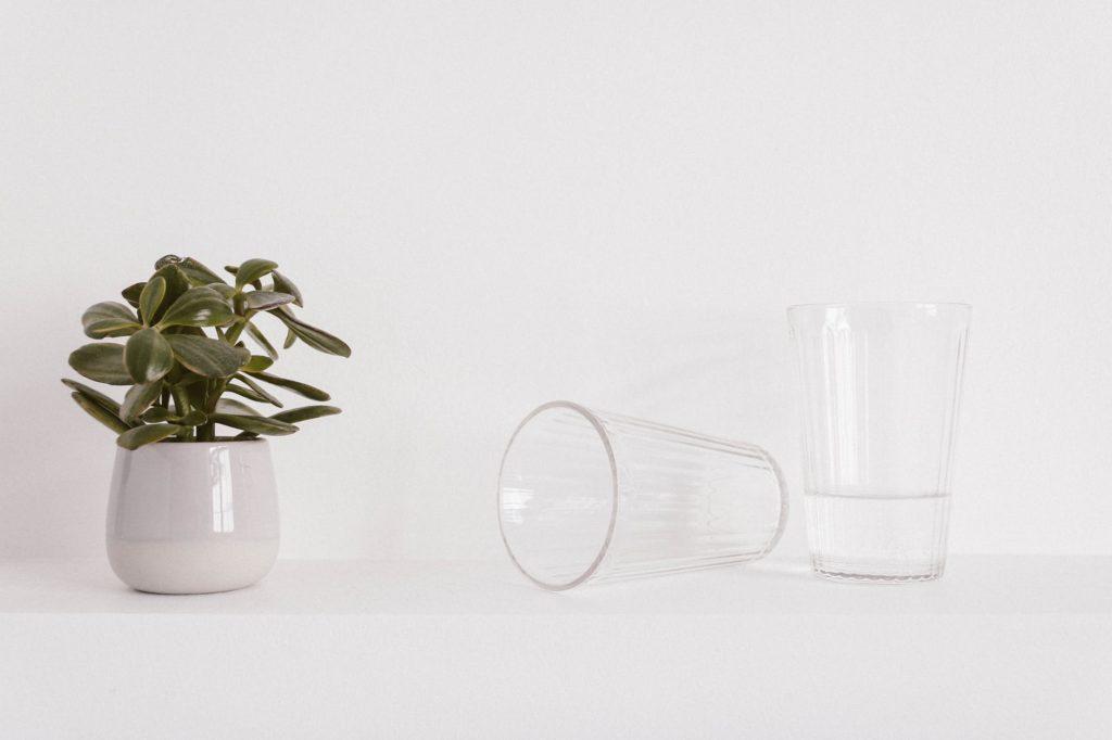 Glas neben einer Pflanze gefüllt mit Leitungswasser das bereit steht zu trinken.